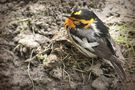 Hémorragies : mon oiseau saigne, que faire ?