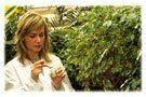 La stevia, une plante aux multiples ressources