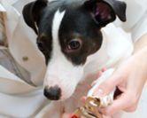 Couper les griffes du chien