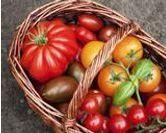 Les différentes variétés de tomates