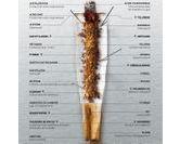 Quelle est la composition d'une cigarette ?