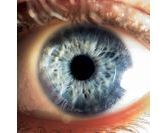 Ce que nos yeux révèlent de notre santé