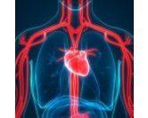 Appareil cardiovasculaire