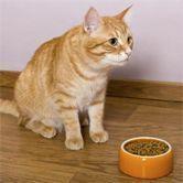 Mon chat ne mange plus