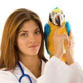 Les maladies des oiseaux