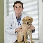 Quand il y a urgence vétérinaire