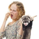 Comment gérer les odeurs du furet ?