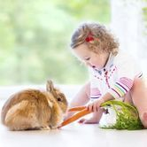 L'équilibre alimentaire du lapin domestique