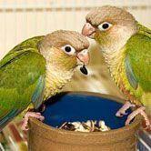 Bien nourrir son oiseau