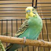 Comment choisir sa cage à oiseaux ?