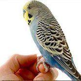 Prendre soin de son oiseau