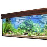 La décoration de mon aquarium