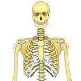 Le système squelettique