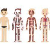 25 informations insolites sur notre corps