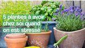 plantes anti-stress