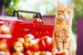 Besoins en vitamines, minéraux et oligoéléments du chat