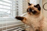 Séparation du couple : que devient le chat ?
