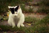 Troubles urinaires chez le chat : causes et traitements