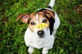 Les allergies du chien