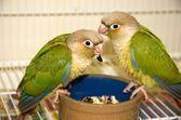 Constipation et diarrhée chez l'oiseau