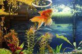 Préparer les poissons à votre absence