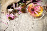 Quelles plantes médicinales pour booster l'immunité ?