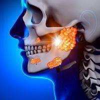glandes salivaires anatomie