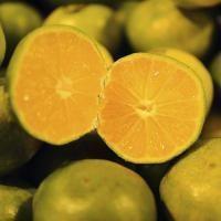 huile-essentielle-de-mandarine-verte_medium