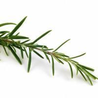 huile-essentielle-de-romarin-a-verbenone_medium