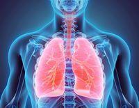 poumons schéma anatomique