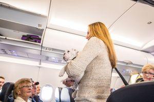 Avion : Les animaux en cabine bientôt interdits