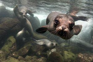 Canada : un village appelle à l'aide face à une invasion de phoques
