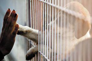 En Grande-Bretagne, la vente de chiots et de chatons interdite dans les animaleries