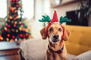 Jouets, friandises, vêtements... le joyeux Noël des animaux