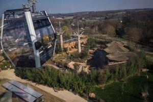 Le zoo de Beauval se dote de télécabines pour survoler les éléphants et les lions