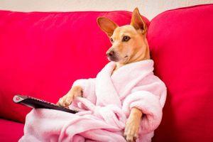 Netflix : les Français regardent leurs séries avec leurs animaux de compagnie