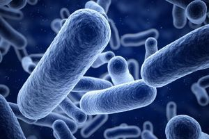 Probiotique: une bactérie prévient des infections graves du nouveau-né