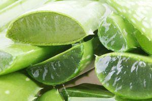 Consommer des feuilles fraîches d'aloe vera n'est pas sans risques
