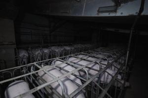 L214 dénonce un élevage intensif de cochons dans le Finistère, avec des images choc
