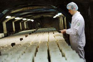 Salmonelles : retrait de lots de Roquefort Société