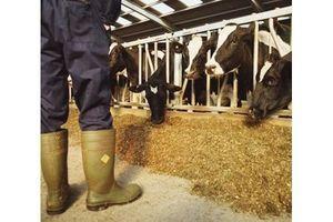 Vers un assouplissement des mesures contre la vache folle ?