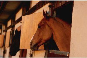 Viande de cheval : Faut-il avoir peur de la phénylbutazone ?