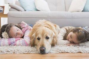 Avoir un chien à la maison réduit l'anxiété des enfants