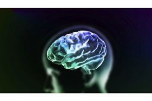 Cerveau : notre capacité de mémoire serait 10 fois plus importante que prévu