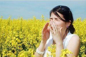 Alerte aux pollens sur une grande partie de la France