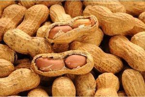Allergie aux cacahuètes : succès d'une tentative de désensibilisation