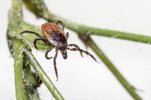 """""""Bourbon"""", un nouveau virus mortel découvert aux Etats-Unis"""