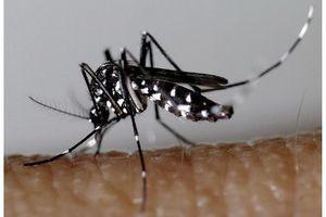 Chikungunya : 4 membres d'une famille contaminés à Montpellier