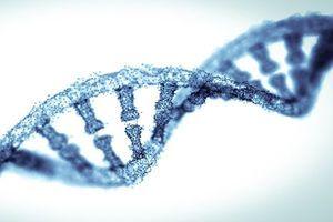 Ciseaux moléculaires pour corriger les gènes : entre espoirs et débat éthique