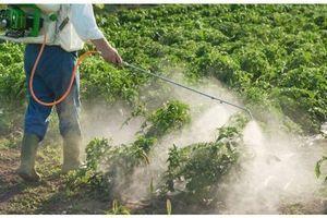 Des pesticides interdits dans nos salades